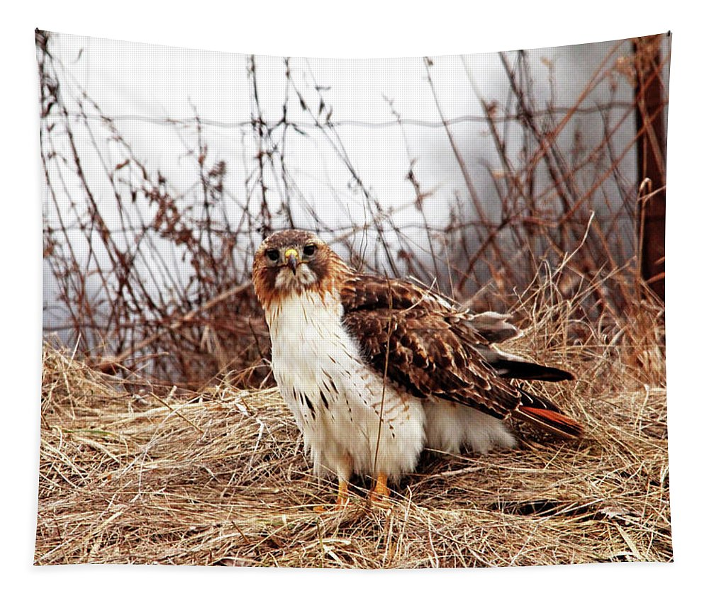 Red Tailed Hawk Tapestry featuring the photograph Red Tailed Hawk In The Field by Debbie Oppermann