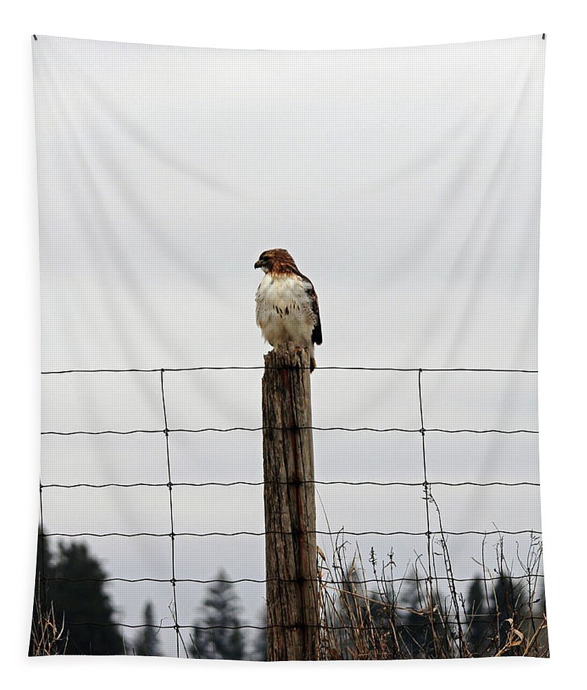 Red Tailed Hawk Tapestry featuring the photograph Red Tailed Hawk On The Lookout by Debbie Oppermann