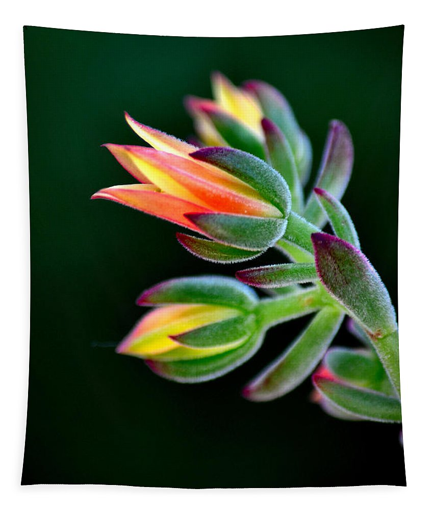 Red Velvet Echeveria Tapestry featuring the photograph Red Velvet by Deb Halloran
