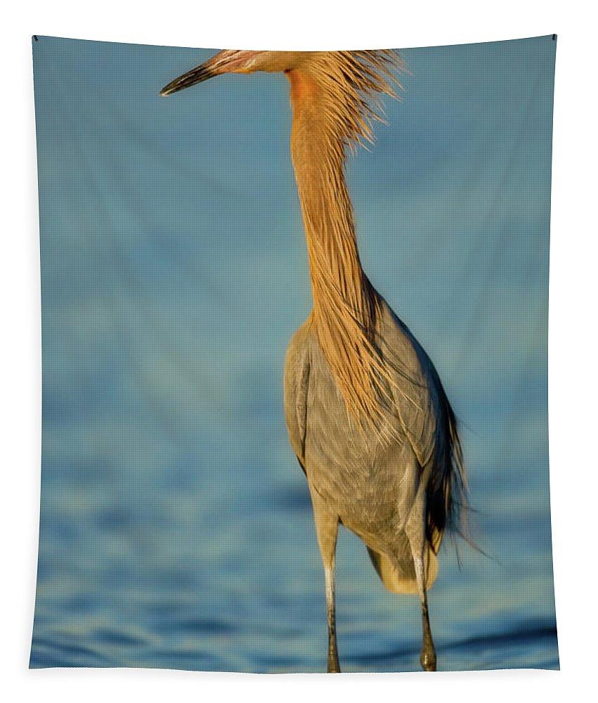 Avian Tapestry featuring the photograph Reddish Egret by Jerry Fornarotto