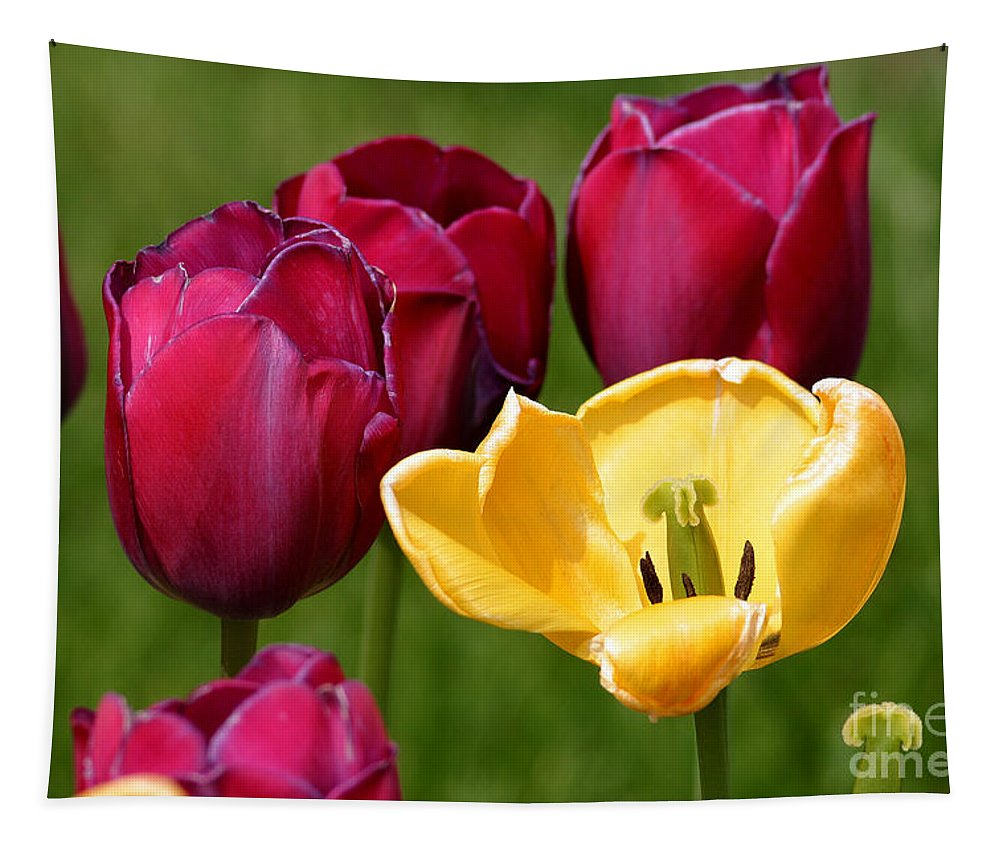 Tulip Tapestry featuring the photograph Redyellowtulips6722 by Gary Gingrich Galleries