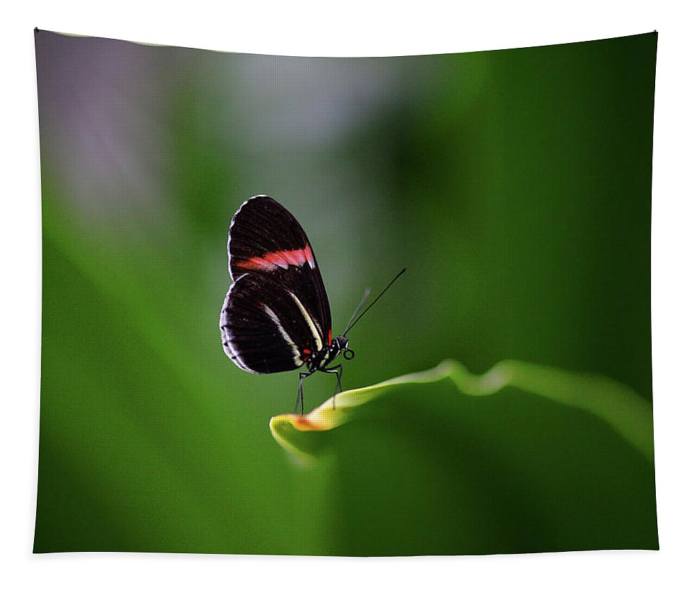 Butterfly Tapestry featuring the photograph Resting Pose by Barbara Treaster