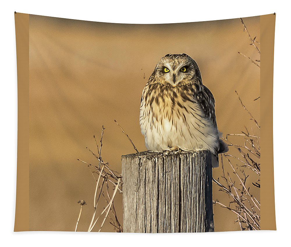 Short-eared Owl Tapestry featuring the photograph Resting Short Eared Owl by Yeates Photography
