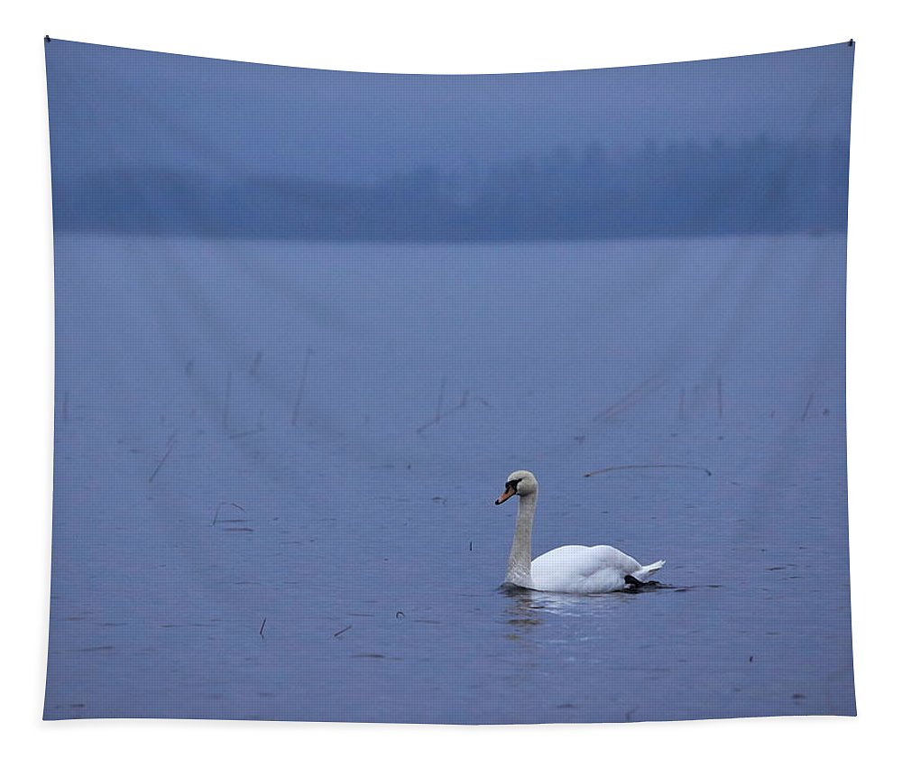 Finland Tapestry featuring the photograph Rhapsody In Blue. Mute Swan by Jouko Lehto
