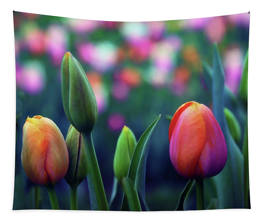 Tulips Tapestry featuring the photograph Rhapsody by Jessica Jenney