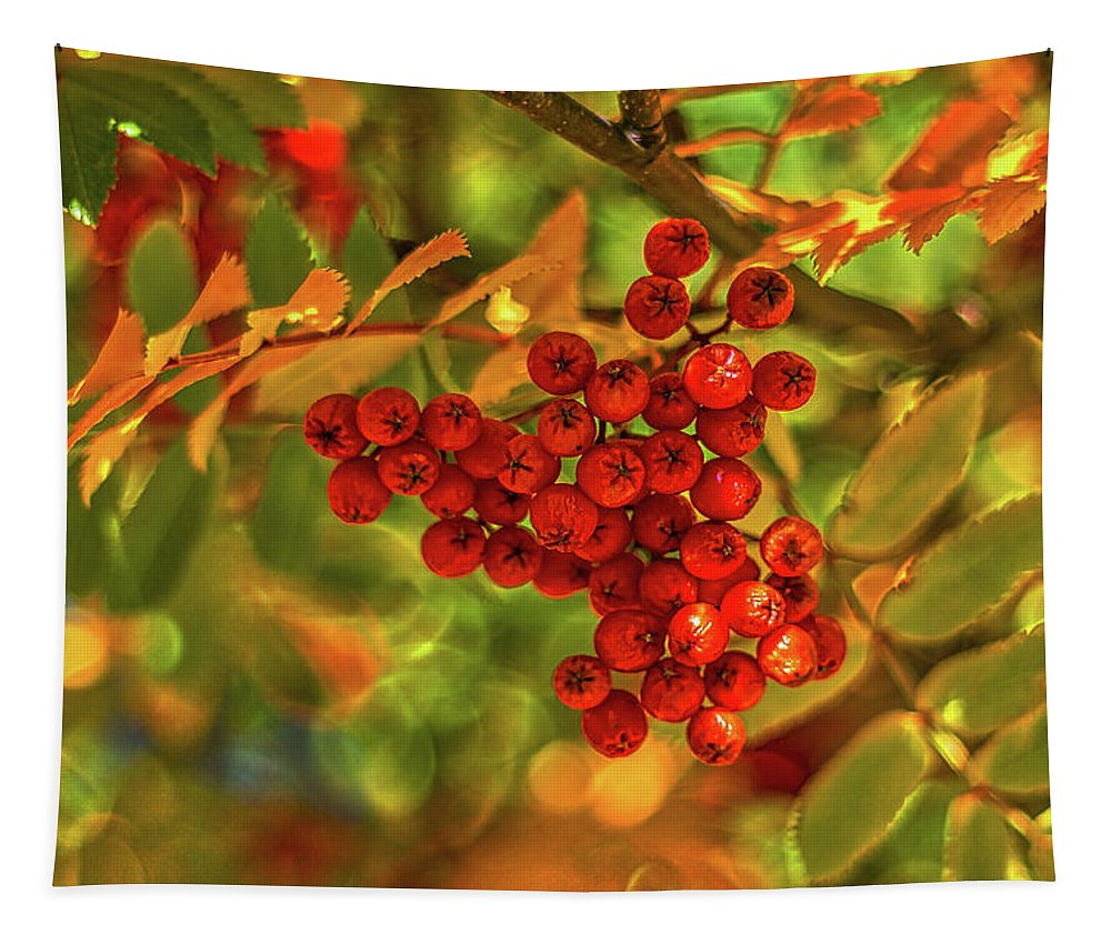 Sorbus Tapestry featuring the photograph Ripe Berries In Autumn - Patagonia by Stuart Litoff
