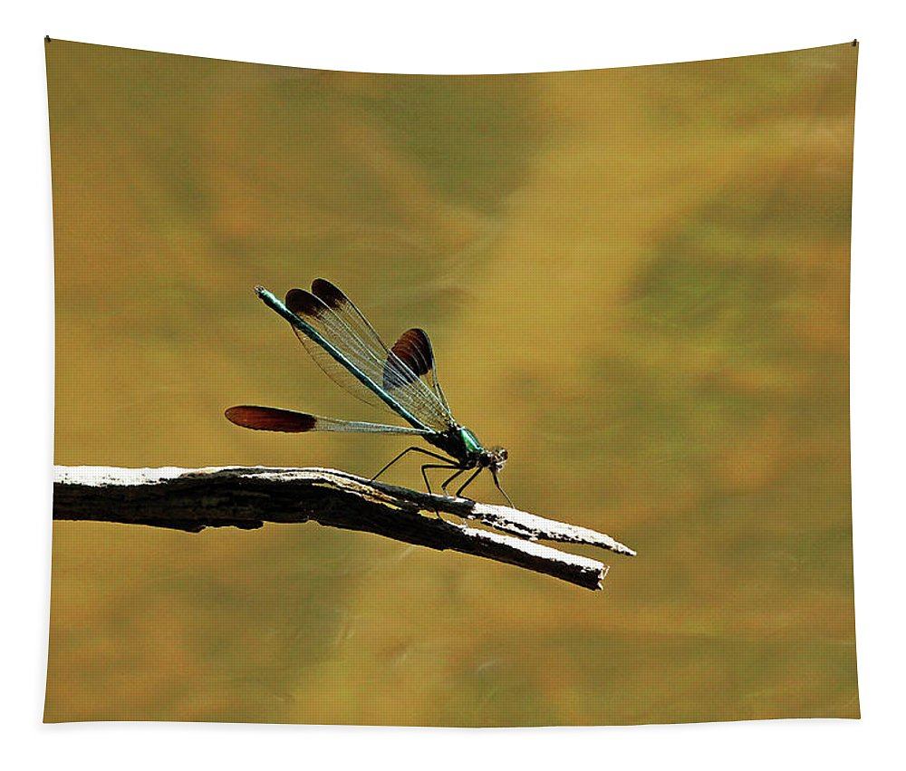 Jewelwing Tapestry featuring the photograph River Jewelwing by Debbie Oppermann