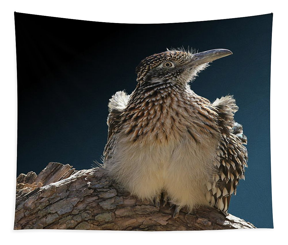 Roadrunner Tapestry featuring the photograph Roadrunner On A Log by Debi Dalio