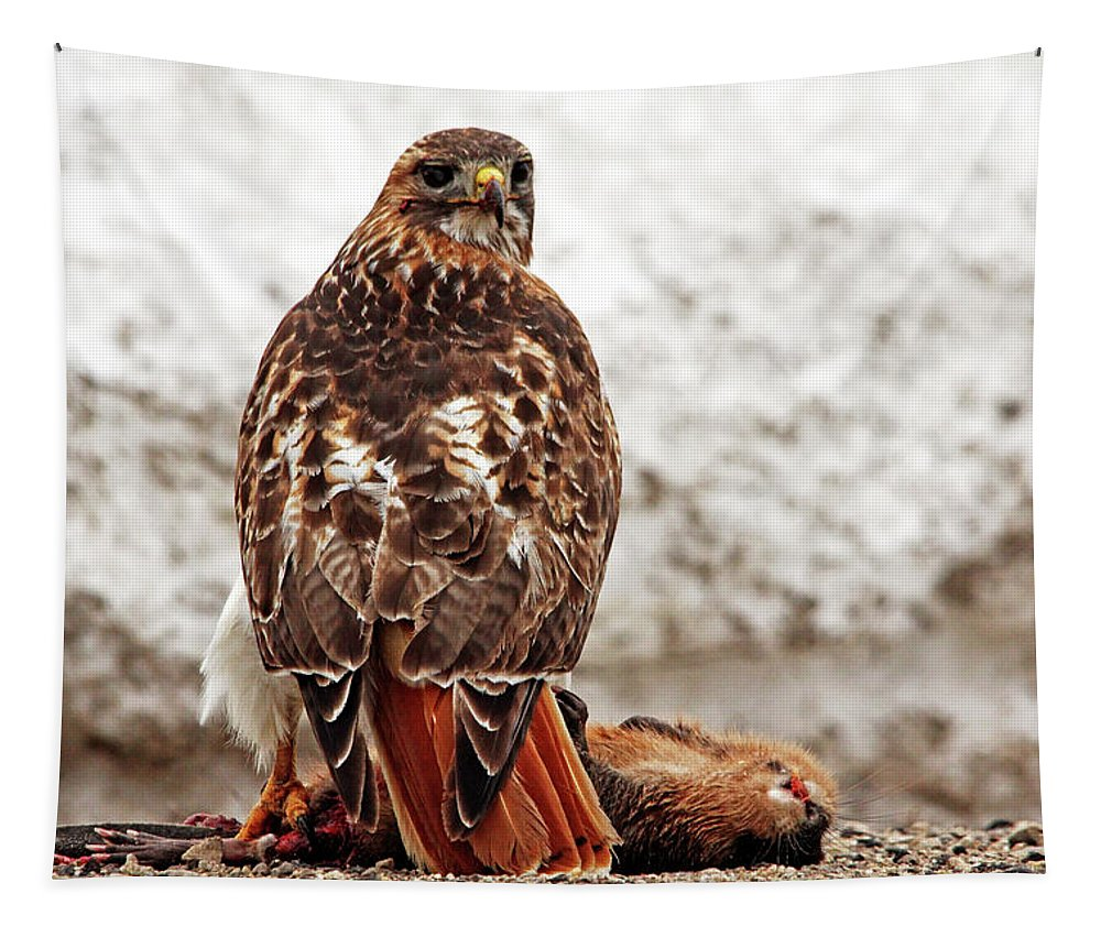 Red Tailed Hawk Tapestry featuring the photograph Roadside Warrior by Debbie Oppermann