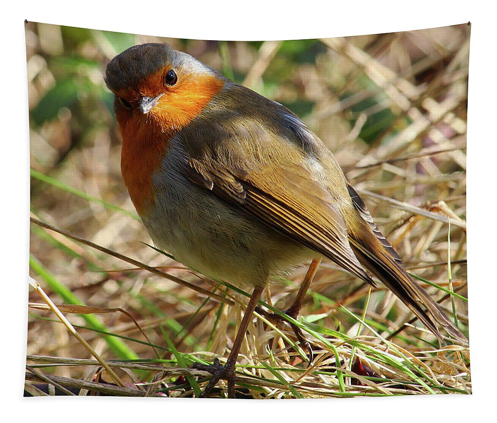 Bird Tapestry featuring the photograph Robin In Hedgerow 3 by Eddie Barron