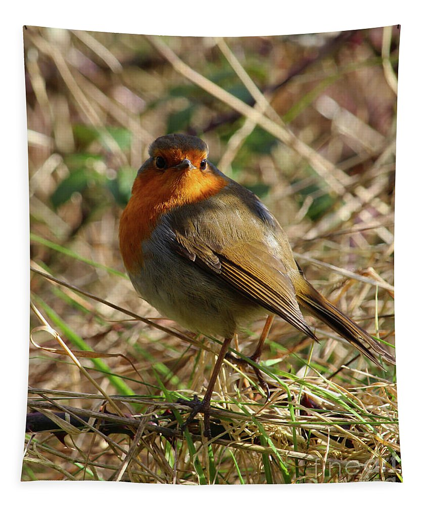 Bird Tapestry featuring the photograph Robin In Hedgerow 2 Inch Donegal by Eddie Barron