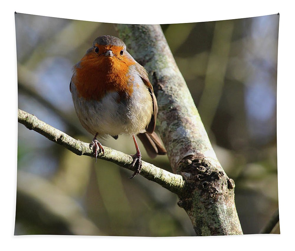 Bird Tapestry featuring the photograph Robin On Branch Donegal by Eddie Barron