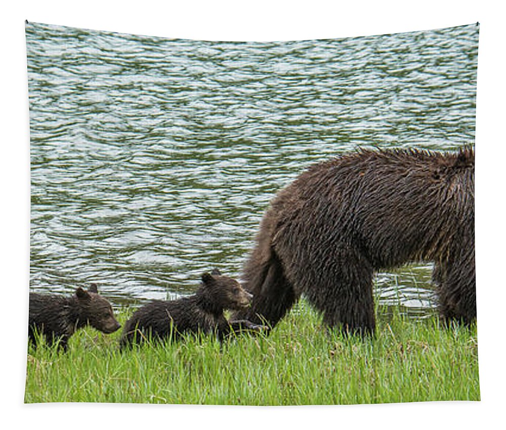 Grizzly Bear Tapestry featuring the photograph Romping By The Lake With Mama Bear by Yeates Photography