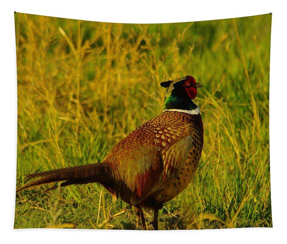 Rooster Tapestry featuring the photograph Rooster Pheasant by Jeff Swan