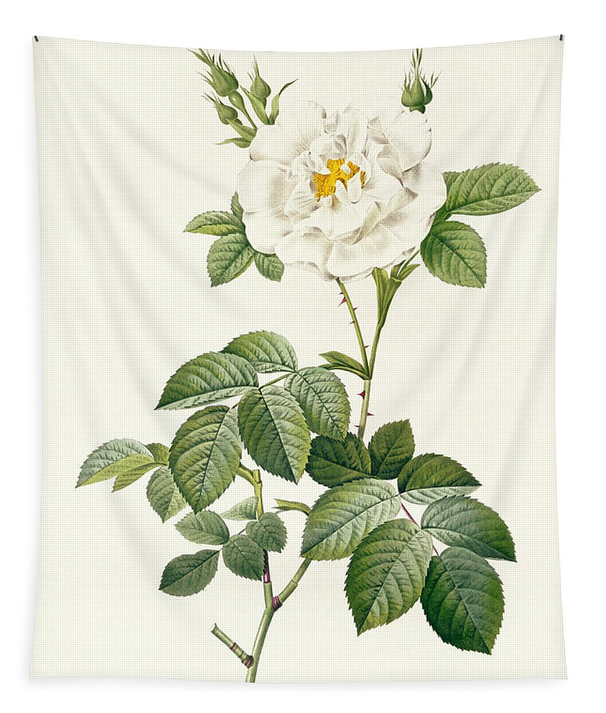 Rosa Tapestry featuring the drawing Rosa Alba Flore Pleno by Pierre Joseph Redoute