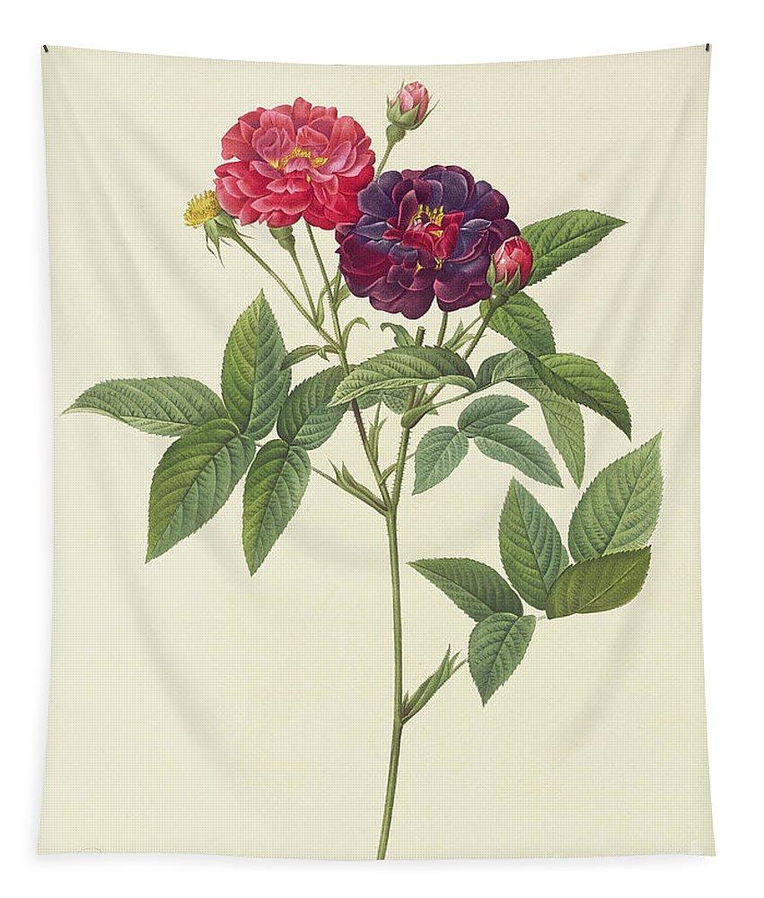 Rosa Tapestry featuring the drawing Rosa Gallica Purpurea Velutina by Pierre Joseph Redoute