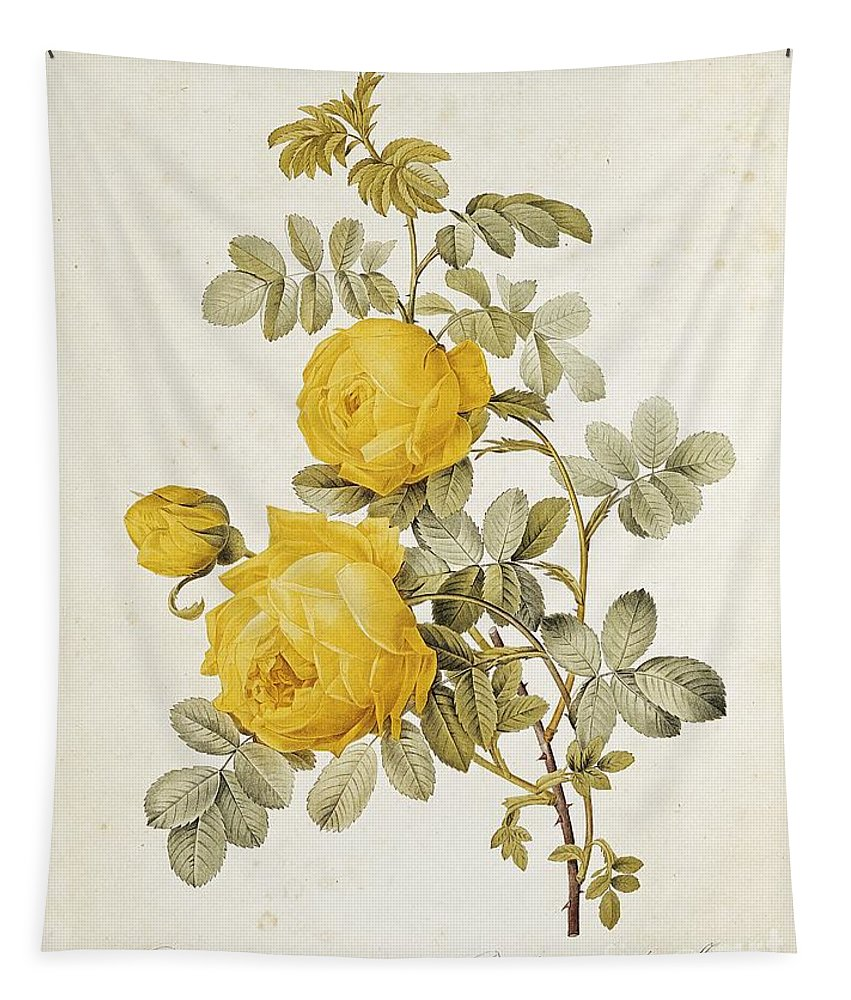 Rosa Tapestry featuring the drawing Rosa Sulfurea by Pierre Redoute