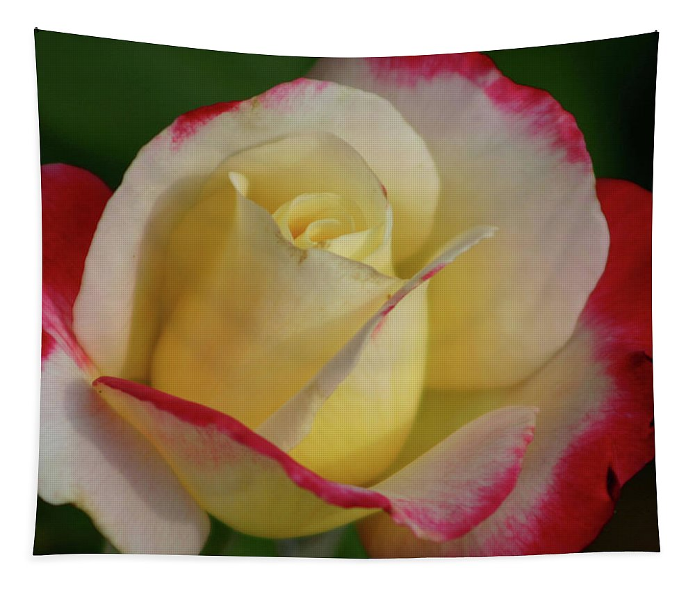 Rose Tapestry featuring the photograph Rose 3913 by Steven Ward