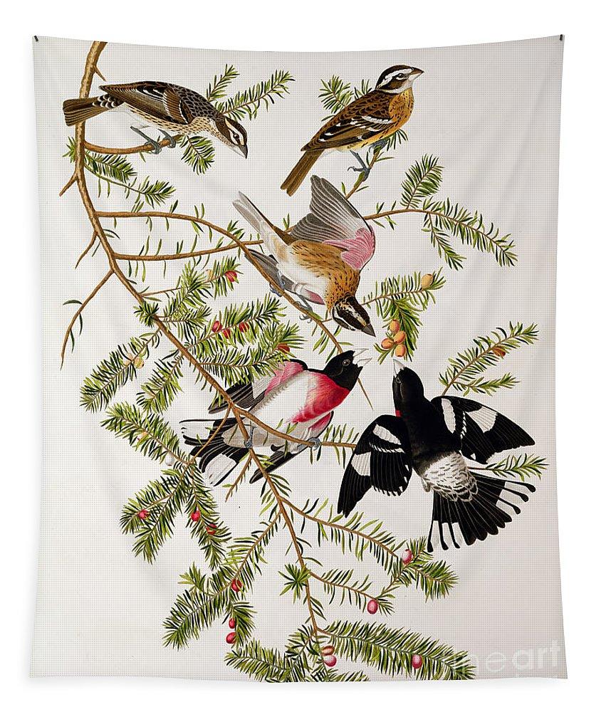 Rose-breasted Grosbeak Tapestry featuring the drawing Rose Breasted Grosbeak by John James Audubon