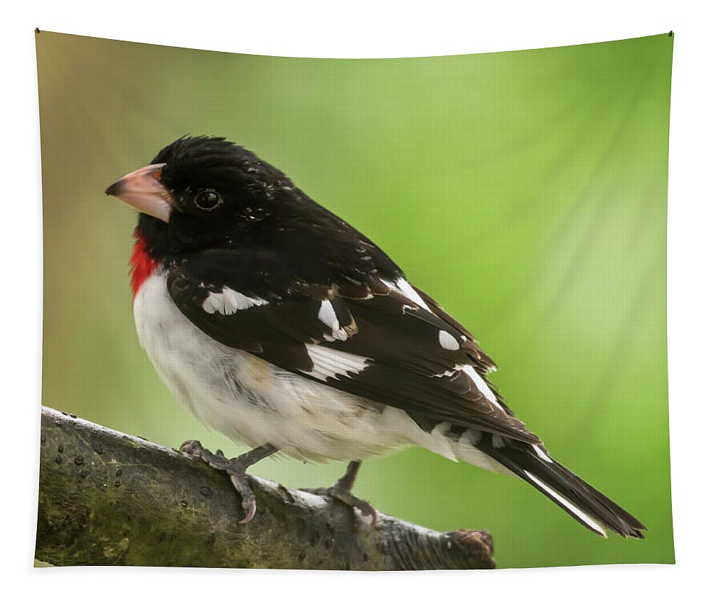 Rose-breasted Grosbeak Male Perched New Jersey Tapestry featuring the photograph Rose-breasted Grosbeak Male Perched New Jersey by Terry DeLuco