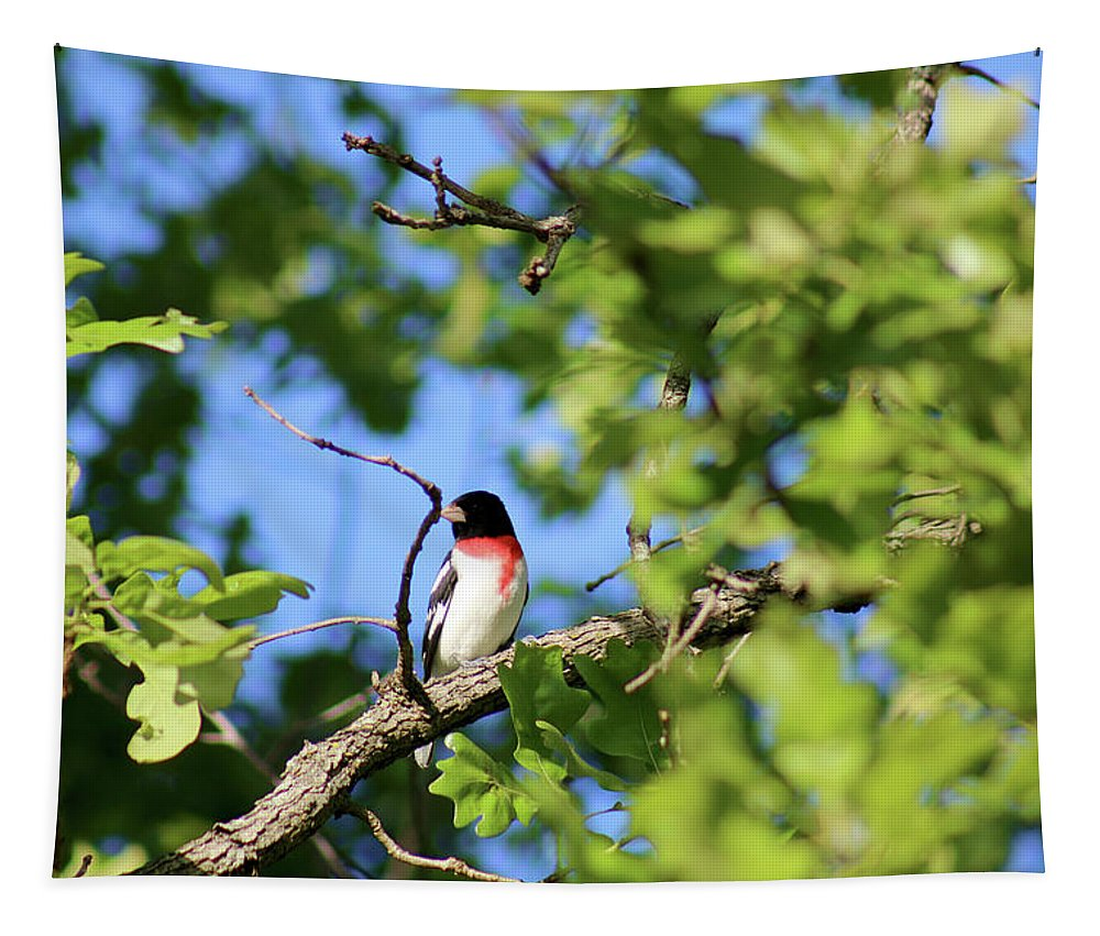 Rose-breasted Grosbeak Tapestry featuring the photograph Rose-breasted Grosbeak by Michael Munster