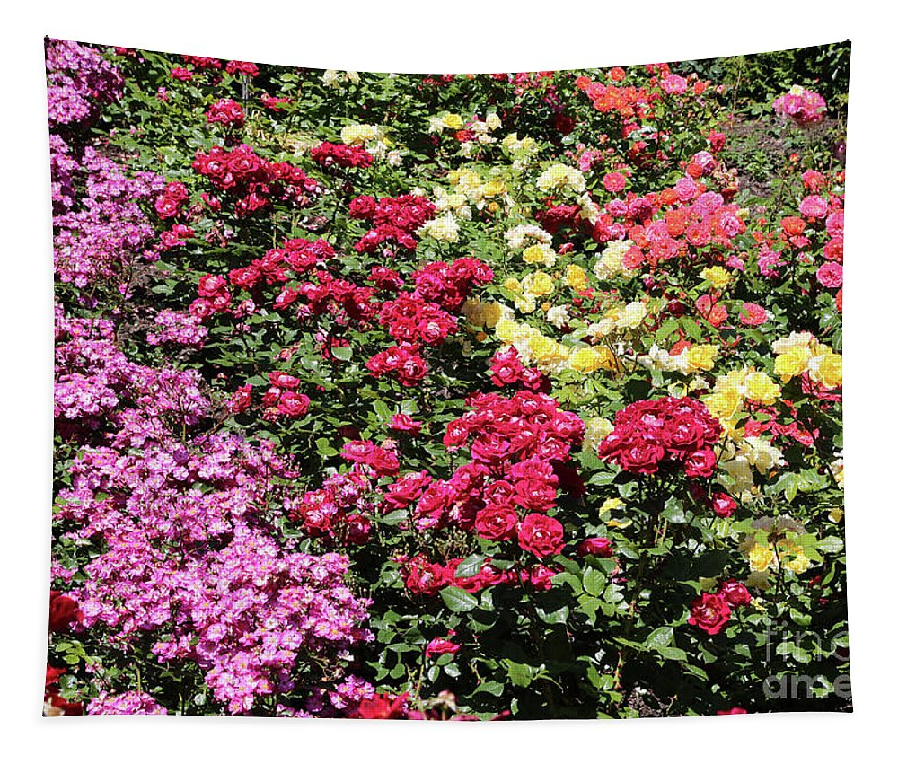 Roses Tapestry featuring the photograph Rose Hill by Carol Groenen