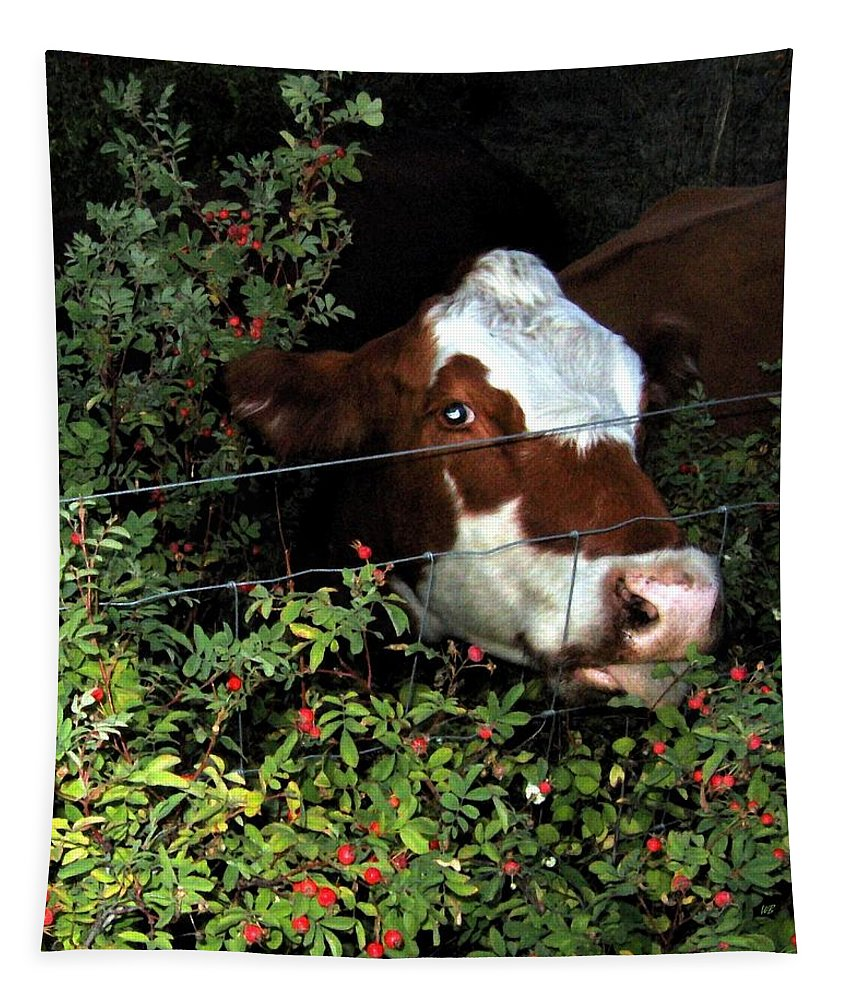 Cow Tapestry featuring the photograph Rosehips For Dessert by Will Borden