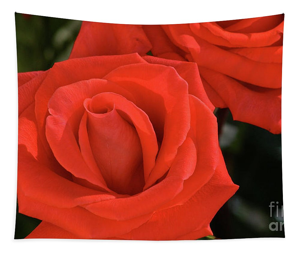 Rose Tapestry featuring the photograph Roses-5814 by Gary Gingrich Galleries