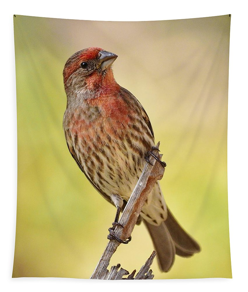 Linda Brody Tapestry featuring the photograph Rosy Finch Macro by Linda Brody