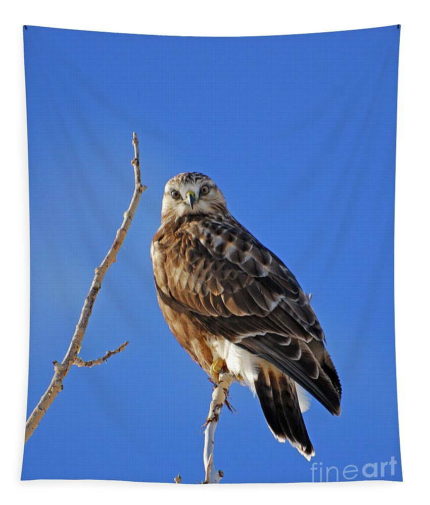 Rough Tapestry featuring the photograph Rough-legged Hawk by Brad Christensen