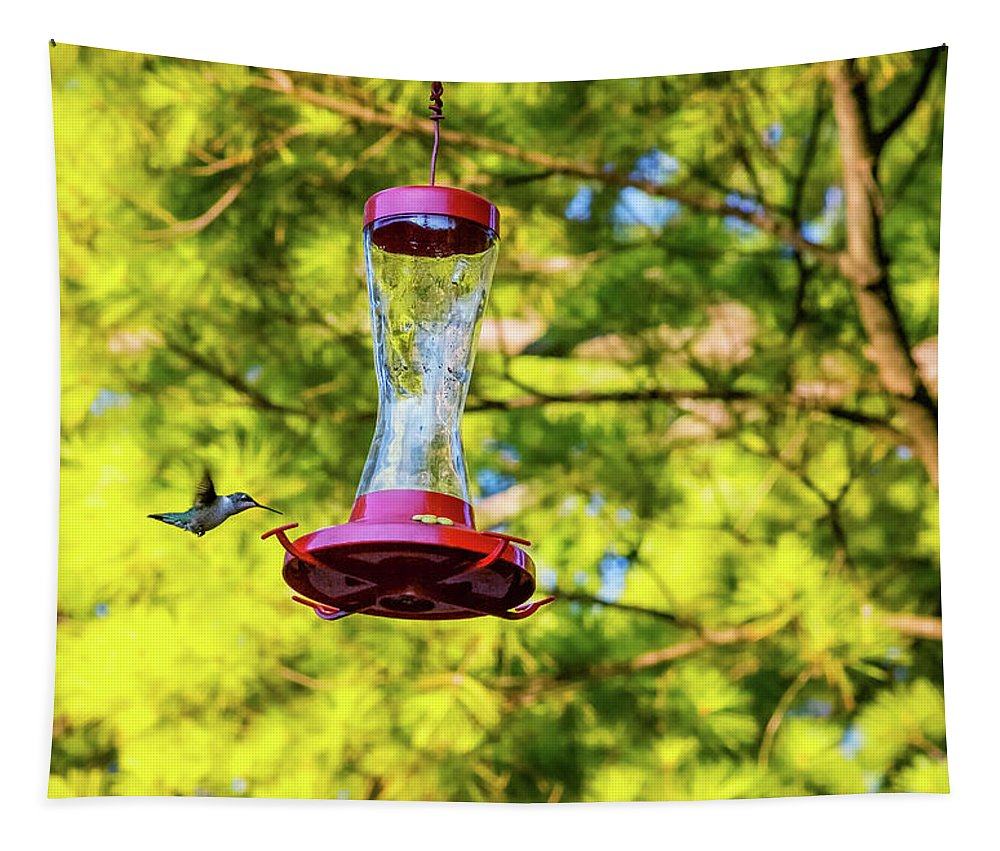 Steve Harrington Tapestry featuring the photograph Ruby-throated Hummingbird 3 by Steve Harrington