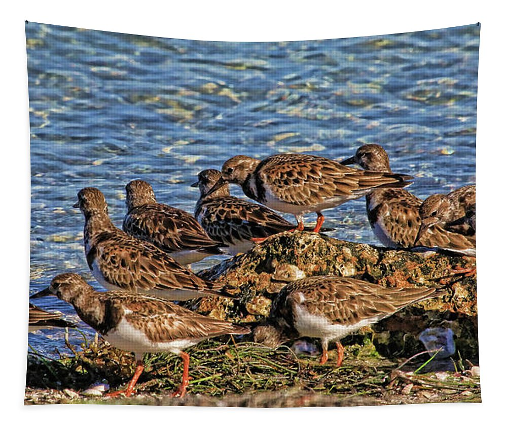Ruddy Turnstone Tapestry featuring the photograph Ruddy's At The Beach by HH Photography of Florida