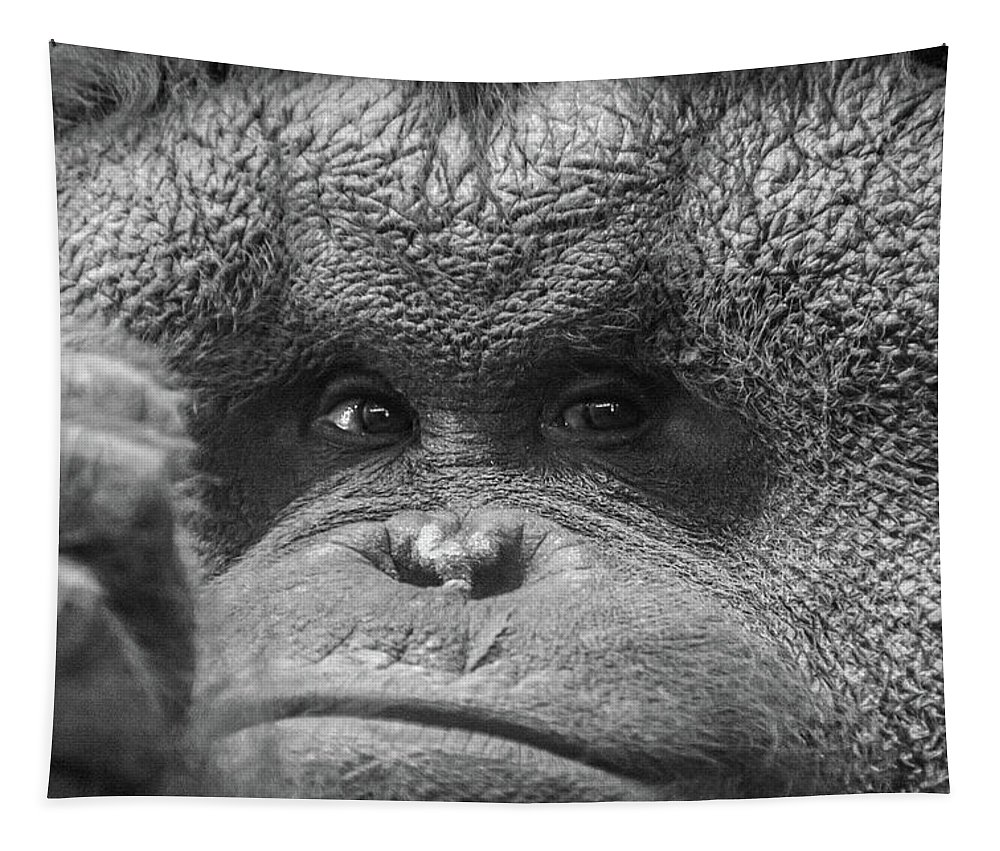 Orangutan Tapestry featuring the photograph Rufus Keeps Watch by Pamela Williams