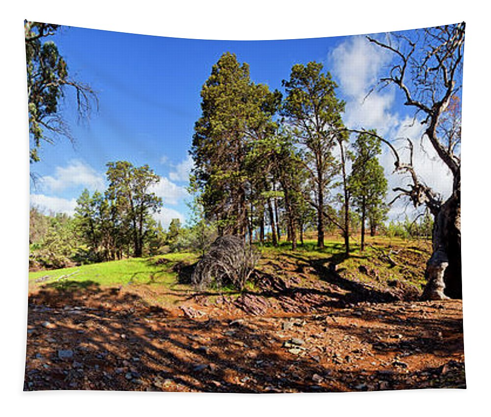 Sacred Canyon Flinders Ranges South Australia Australian Landscape Pano Panorama Outback Spring Tapestry featuring the photograph Sacred Canyon, Flinders Ranges by Bill Robinson