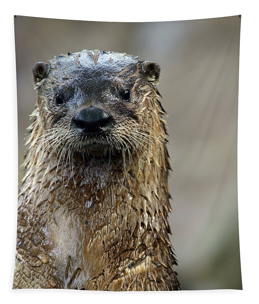 Otter Tapestry featuring the photograph Soaking Wet by Karol Livote