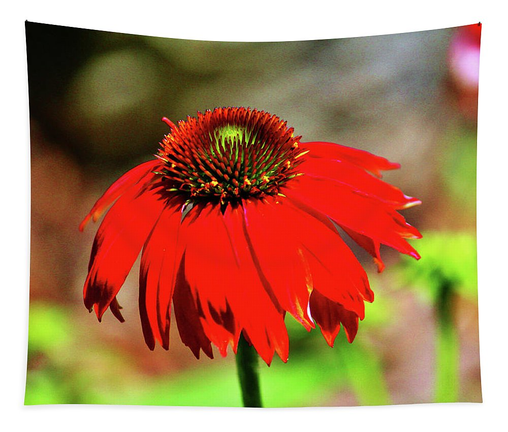 Coneflower Tapestry featuring the photograph Salsa Red Coneflower by Cynthia Guinn