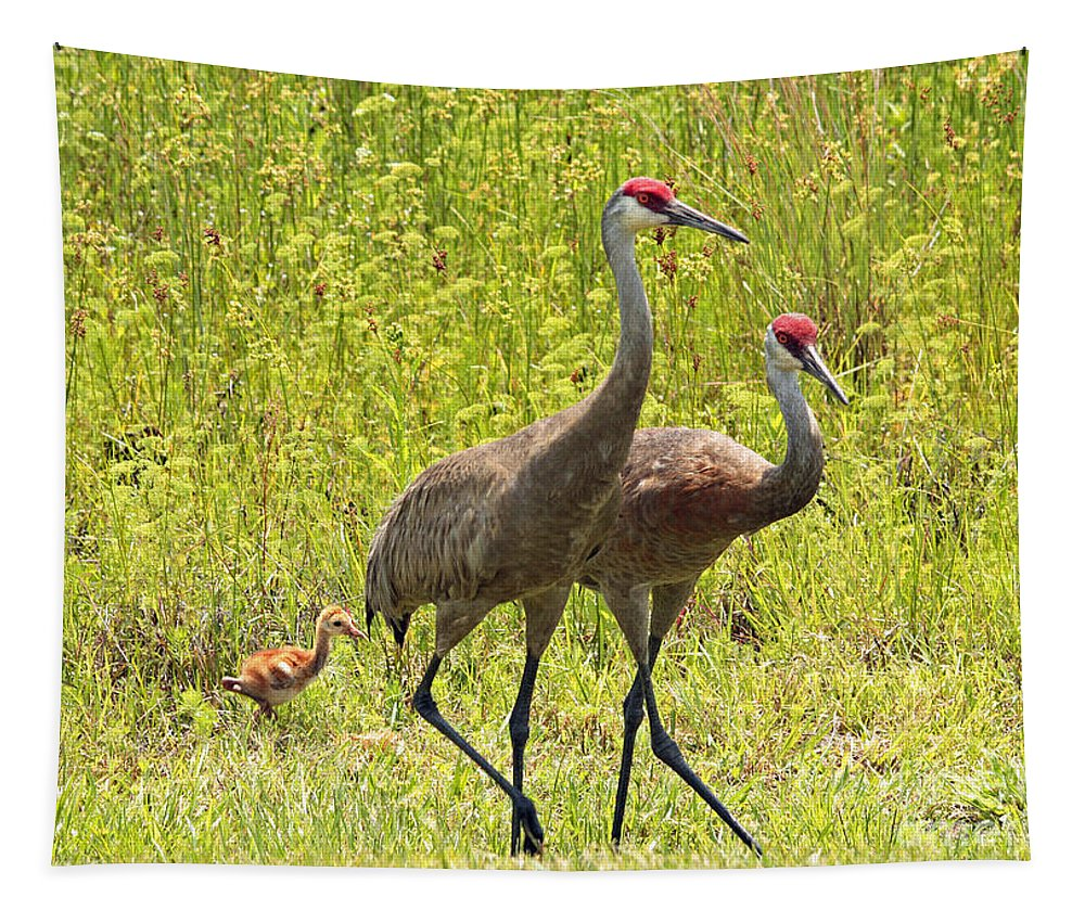Sandhill Cranes Tapestry featuring the photograph Sandhill Crane Family by Carol Groenen
