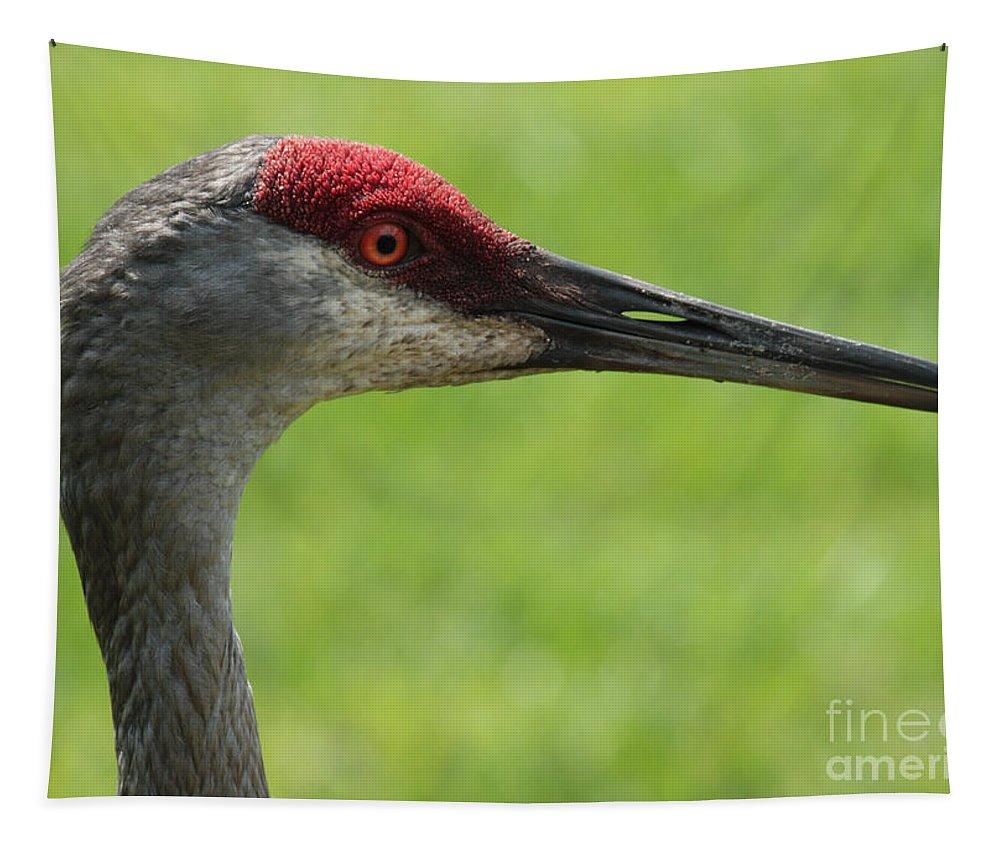 Sandhill Crane Tapestry featuring the photograph Sandhill Crane Profile by Carol Groenen