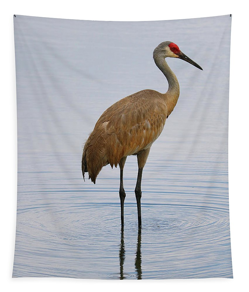 Sandhill Tapestry featuring the photograph Sandhill Standing In Peaceful Pond by Carol Groenen