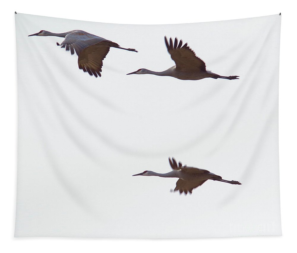 Sandhill Cranes Tapestry featuring the photograph Sandhills In Flight by Jeff Swan