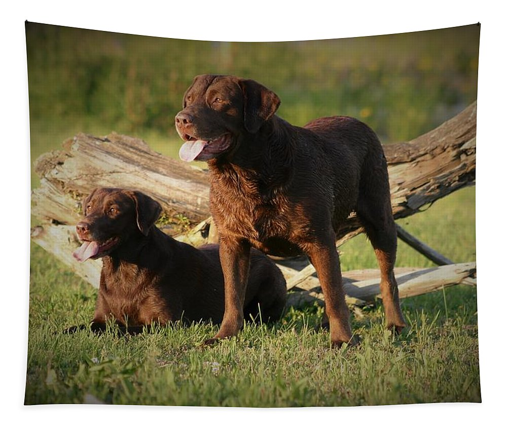 Labrador Tapestry featuring the photograph Sarah And Remington 2934_4 by Steven Ward