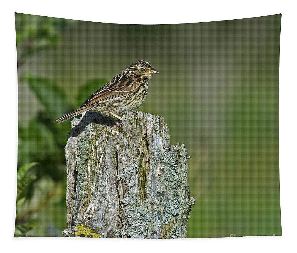 Savannah Sparrow Tapestry featuring the photograph Savannah Sparrow.. by Nina Stavlund
