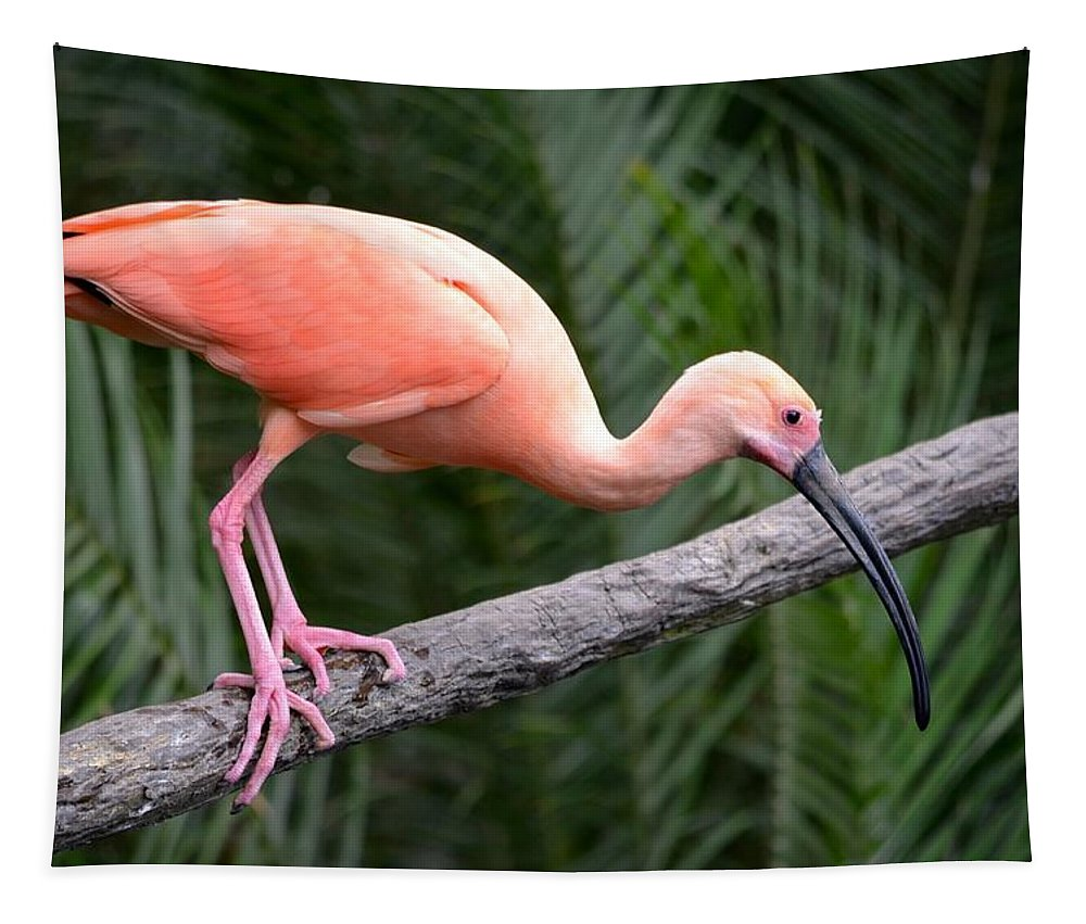 Jacksonville Zoo Tapestry featuring the photograph Scarlet Ibis by Richard Bryce and Family