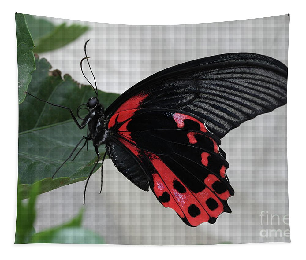 Butterfly Tapestry featuring the photograph Scarlet Mormon Butterfly #2 by Judy Whitton