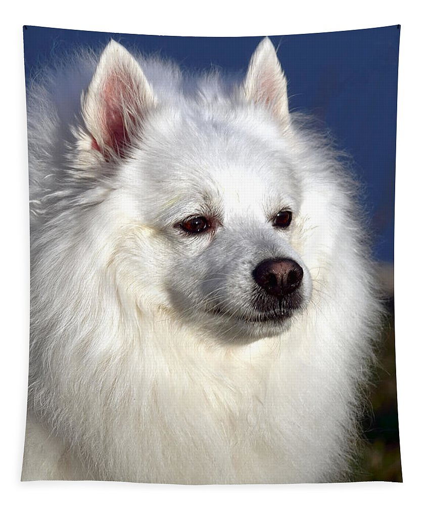 American Eskimo Tapestry featuring the photograph Scooby by Olivier Le Queinec