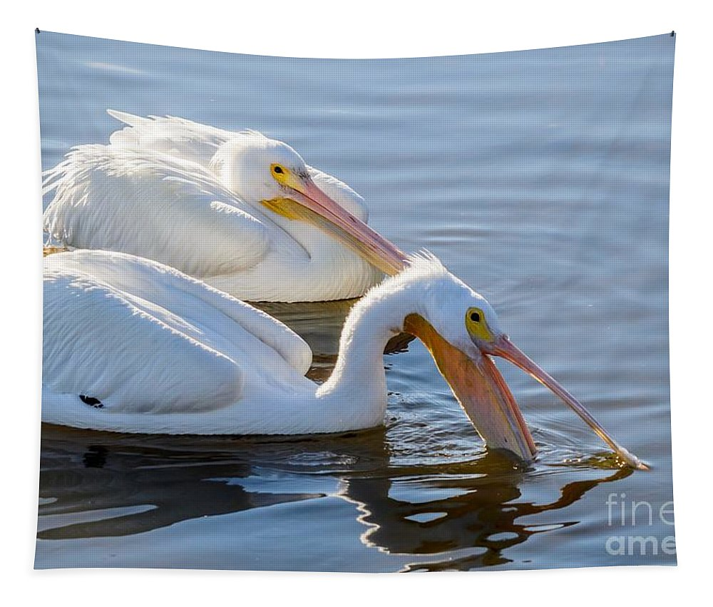 American White Pelican Tapestry featuring the photograph Scooping For Fish by Debra Martz