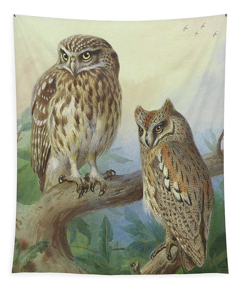 Scops Owl Tapestry featuring the mixed media Scops Owl By Thorburn by Archibald Thorburn