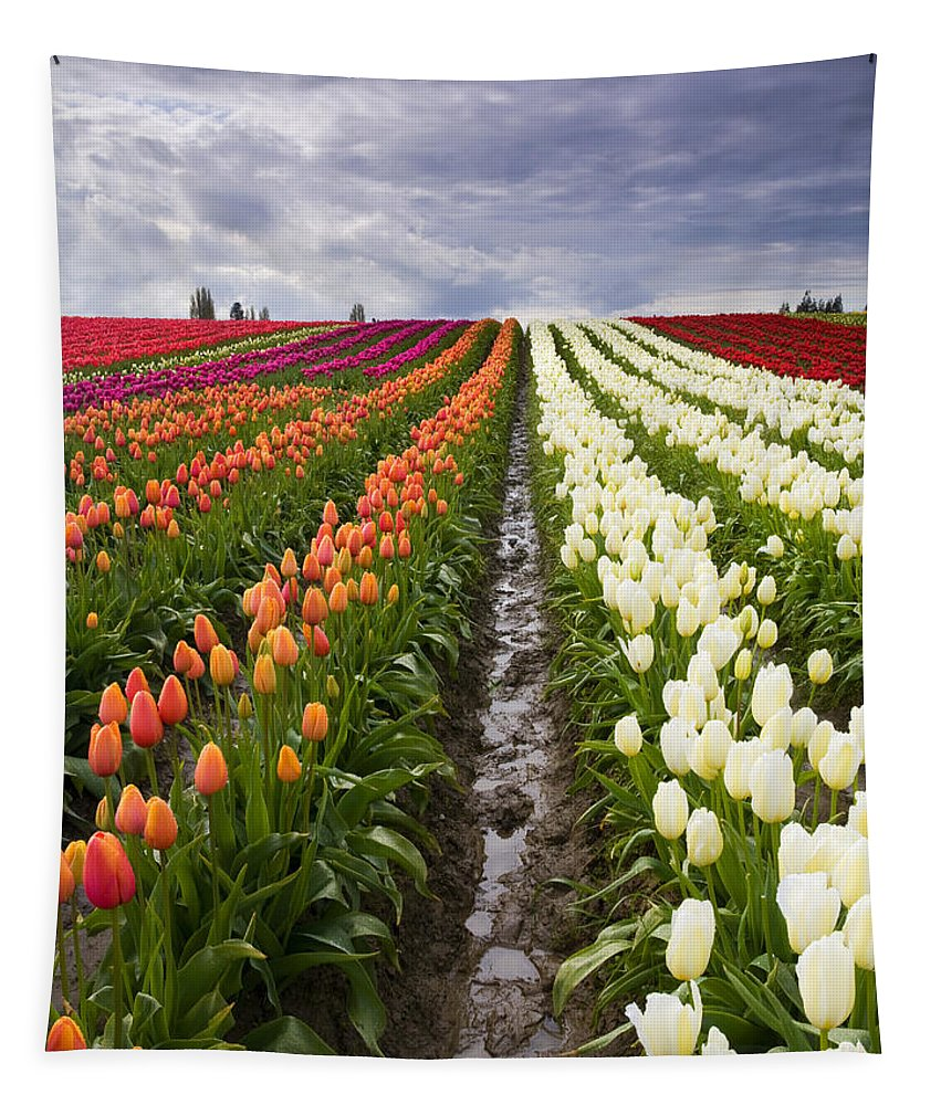 Tulips Tapestry featuring the photograph Sea Of Color by Mike Dawson
