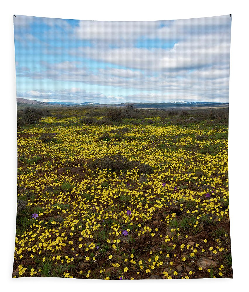 Gold Stars Tapestry featuring the photograph Sea Of Gold by Mike Dawson