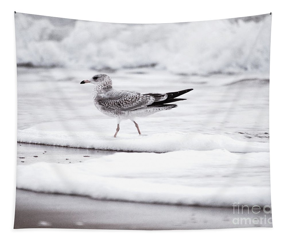 Gull Tapestry featuring the photograph Seabird by Rachel Morrison